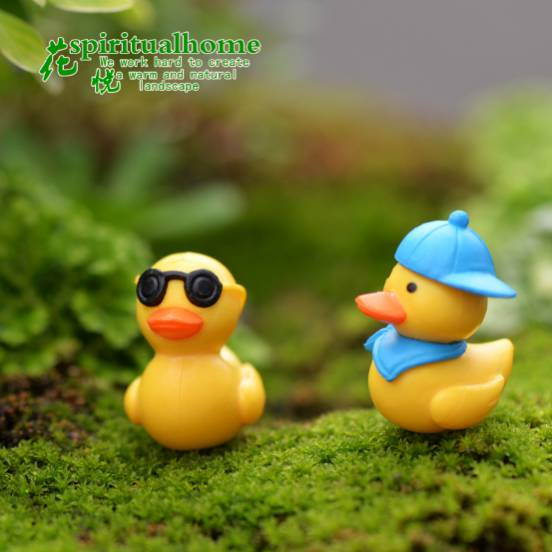 Miniature ducks